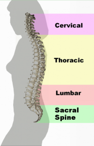 chiropractor 61604